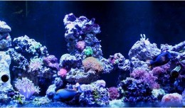 marine aquarium filtration