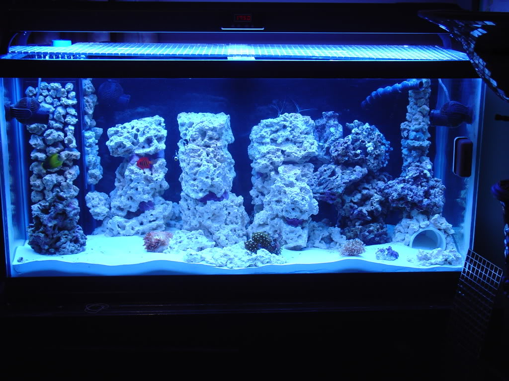 the importance of water flow and movement reef aquarium